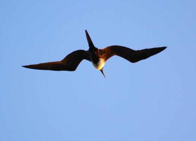 加勒比海上空的海鸥_图1-7