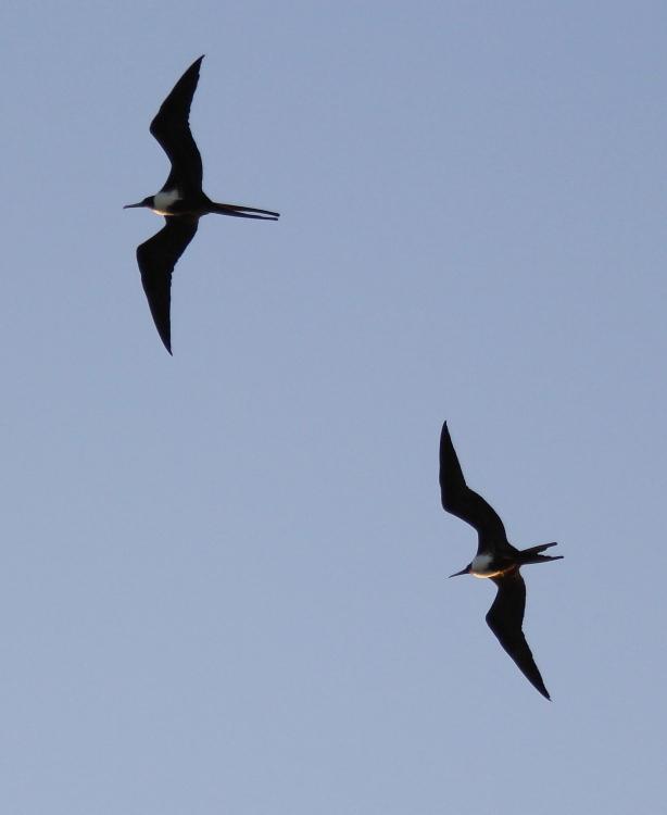 加勒比海上空的海鸥_图1-8