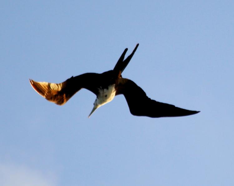 加勒比海上空的海鸥_图1-9