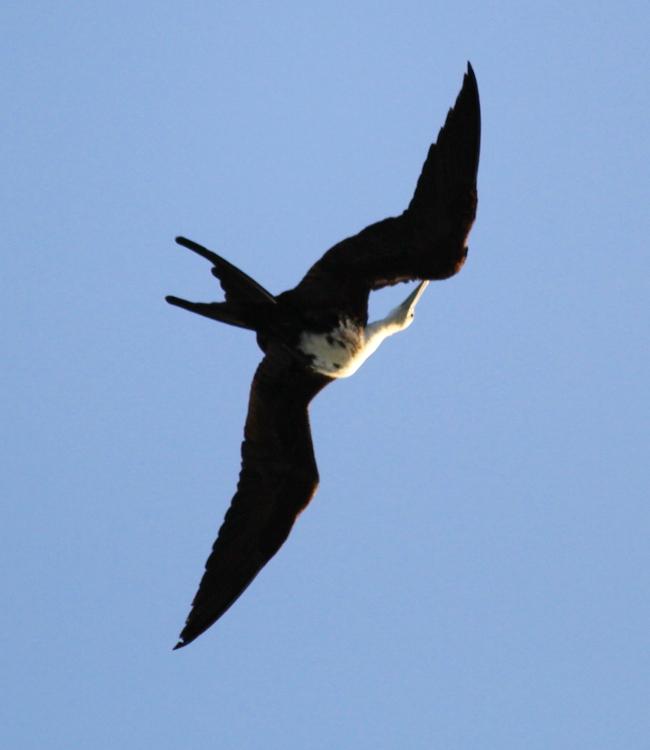 加勒比海上空的海鸥_图1-11