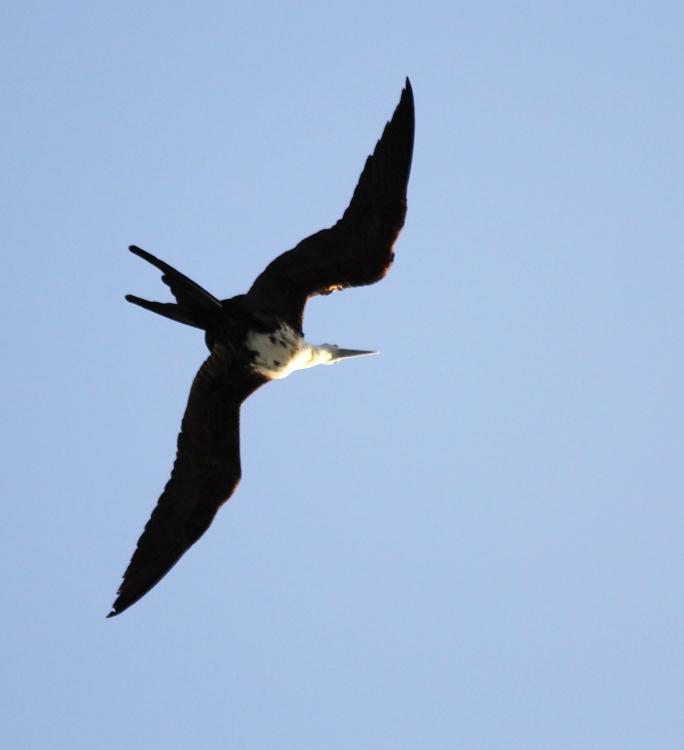 加勒比海上空的海鸥_图1-12