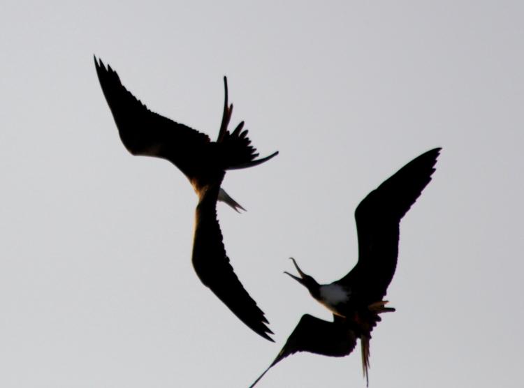 加勒比海上空的海鸥_图1-13