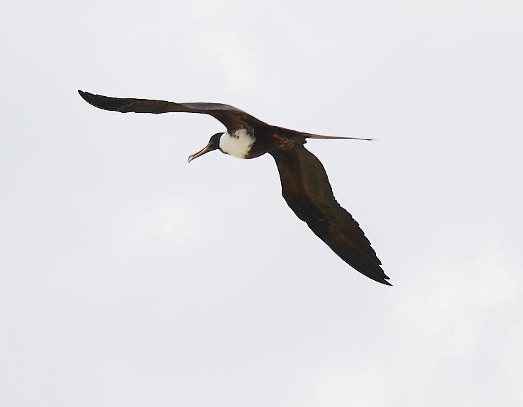 加勒比海上空的海鸥_图1-15