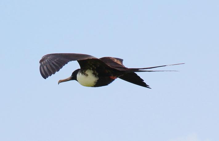加勒比海上空的海鸥_图1-16