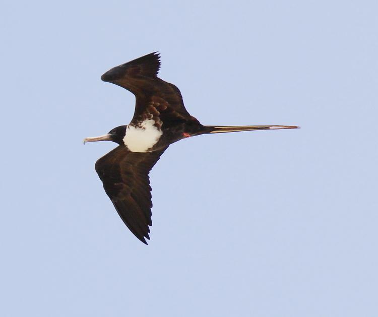 加勒比海上空的海鸥_图1-20