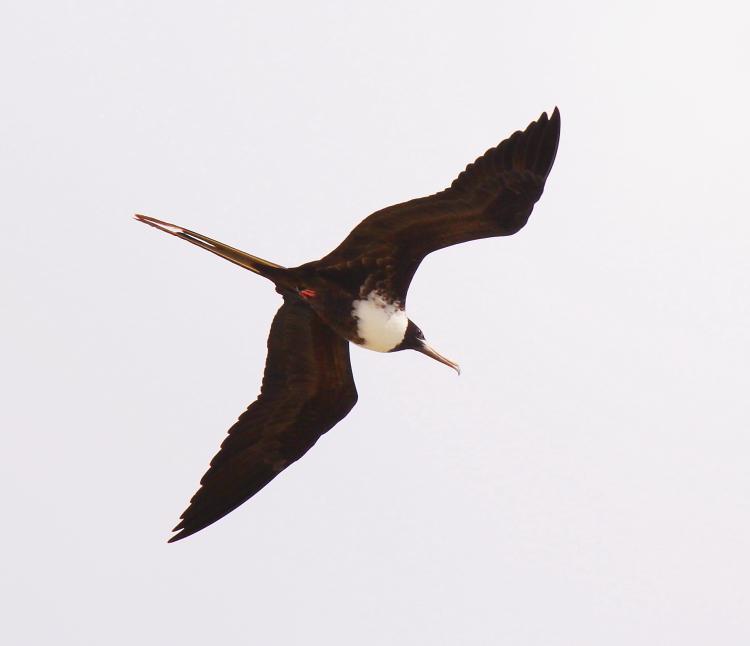 加勒比海上空的海鸥_图1-19