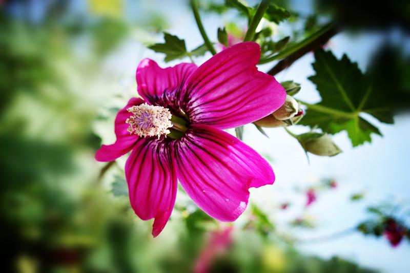 加州春暖花开_图1-8