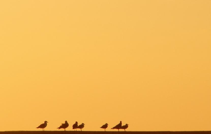 【攝影蟲】極簡主義攝影 Minimalism Photography_图1-16