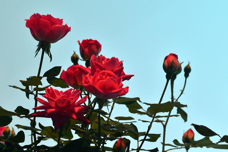梅西花展_图1-28