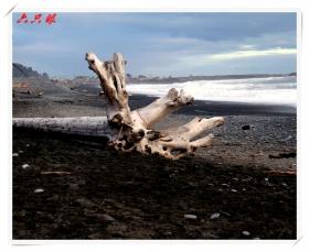 六只眼:海浪与漂流木