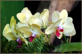 【star8拍攝】随拍macy's花展的兰花