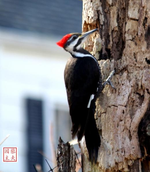 啄木鸟随春来_图1-3