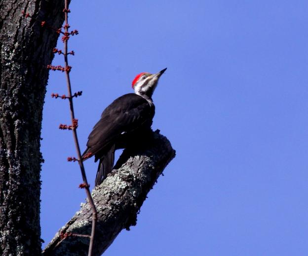 啄木鸟随春来_图1-8