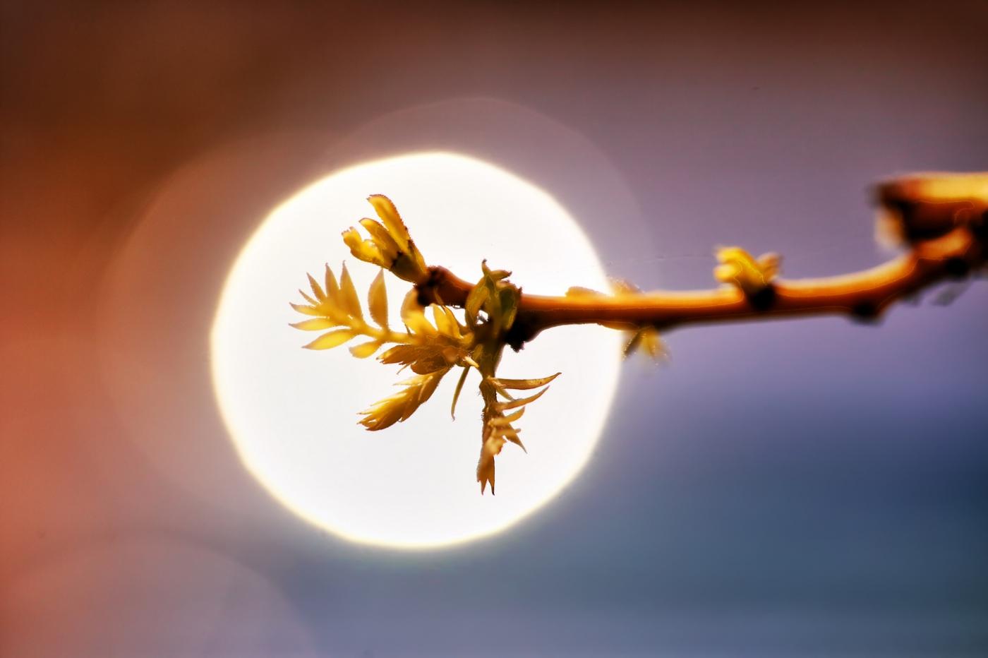感受春天的节奏_图1-1