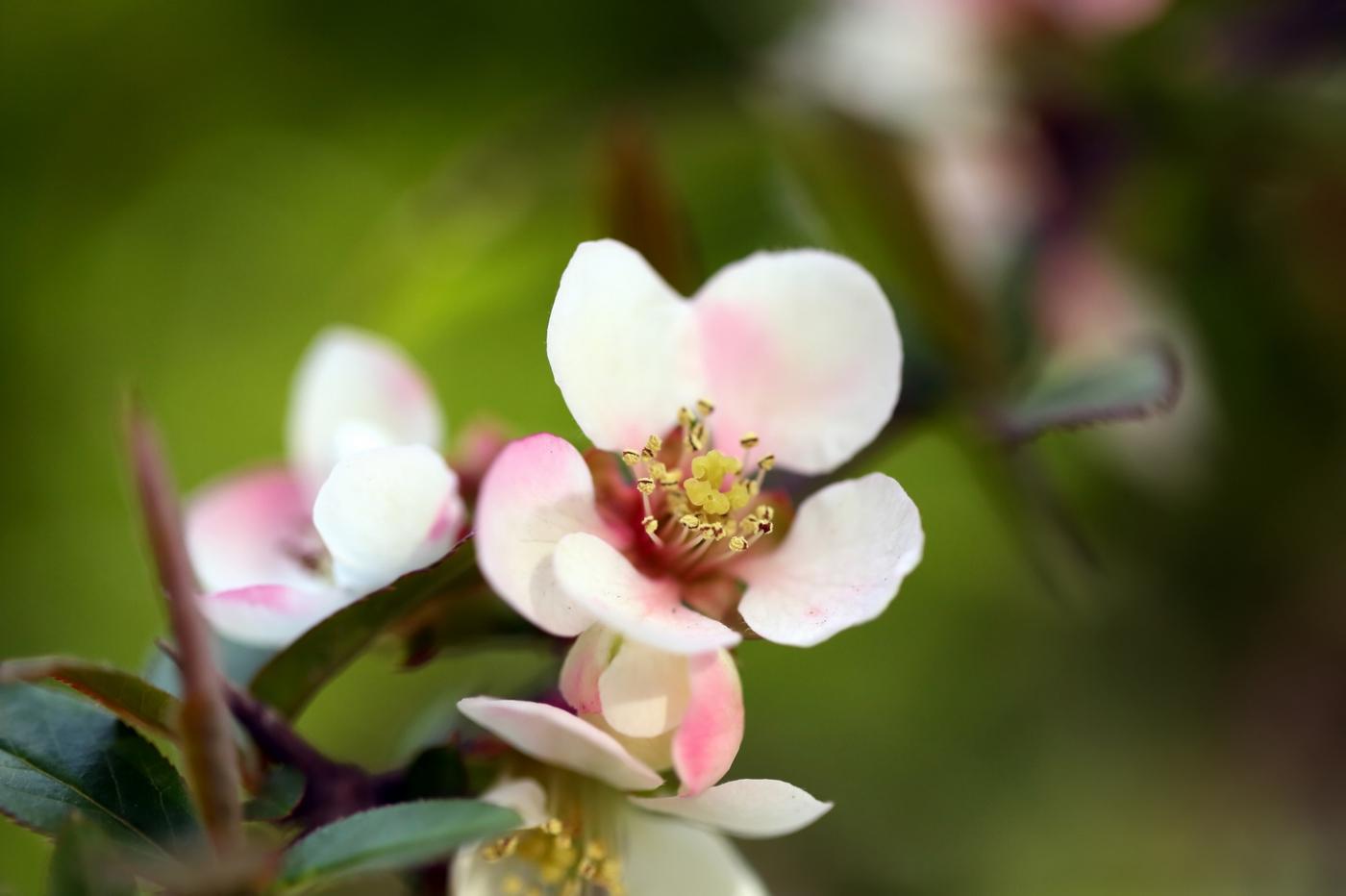 感受春天的节奏_图1-3