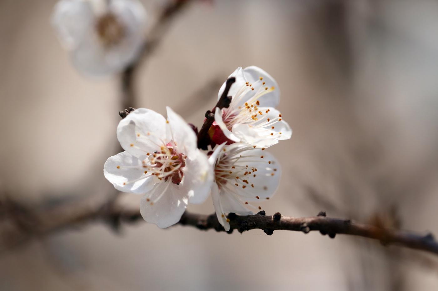 感受春天的节奏_图1-5