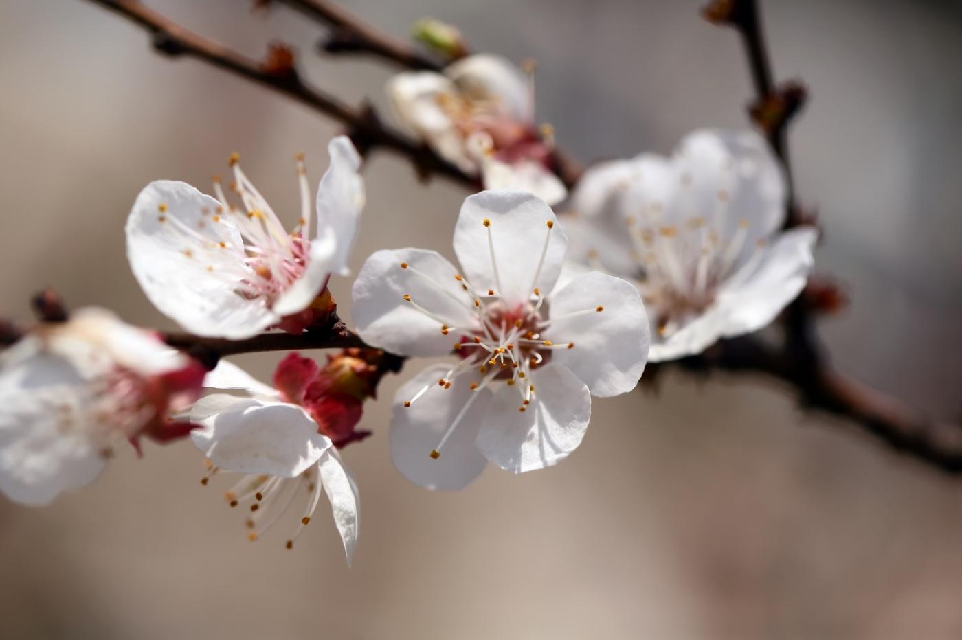 感受春天的节奏_图1-6