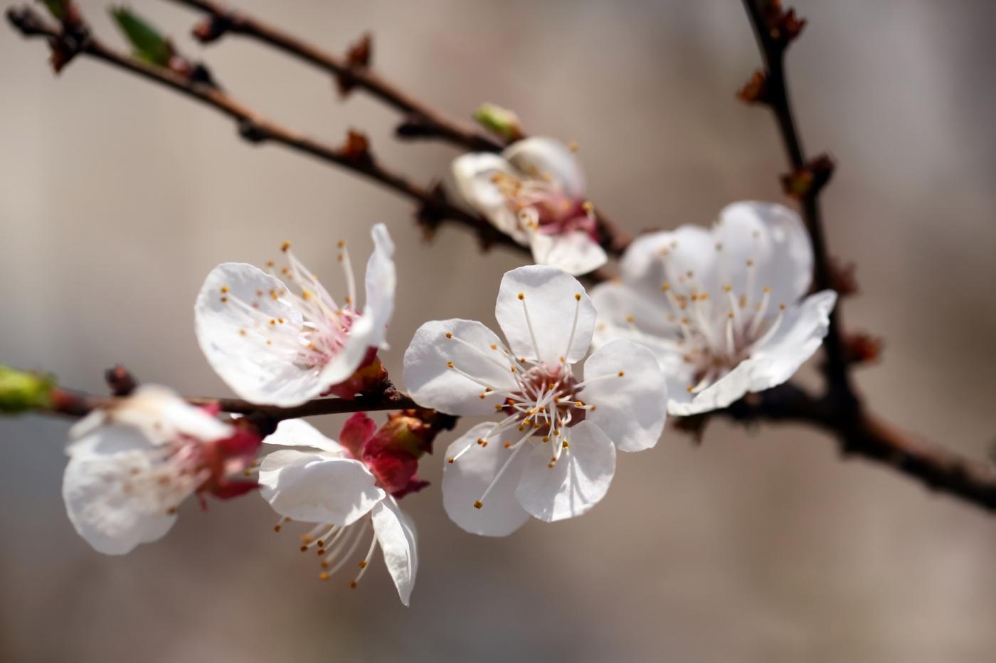 感受春天的节奏_图1-7