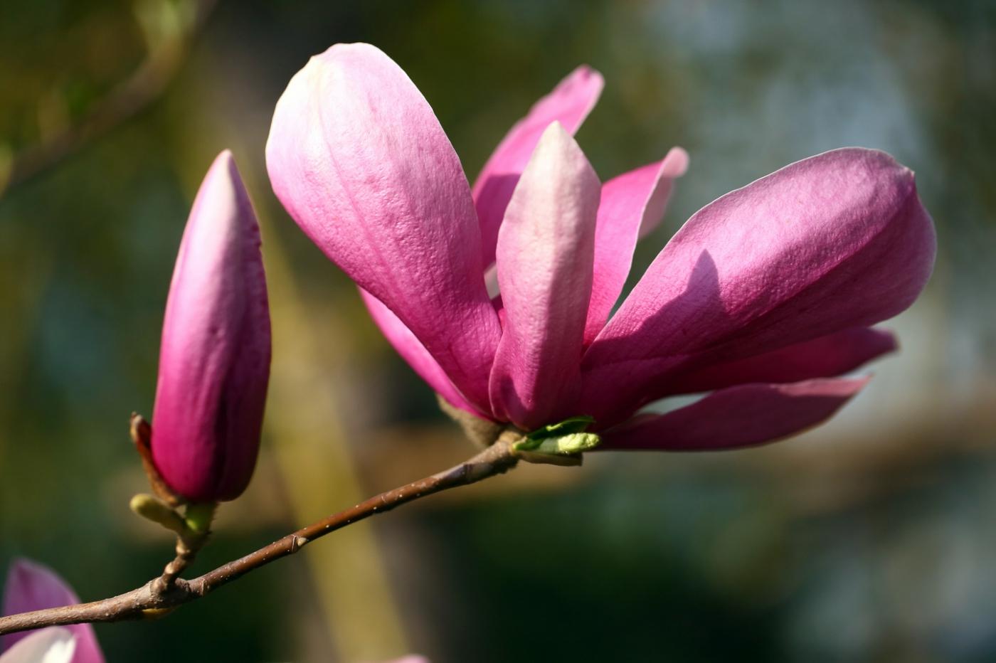 感受春天的节奏_图1-12