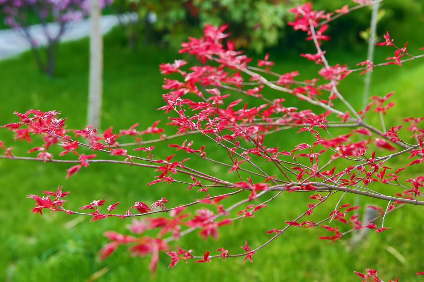 感受春天的节奏_图1-17