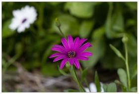 路边的野菊花