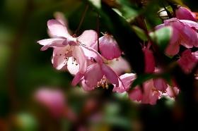 花卉摄影的虚与实