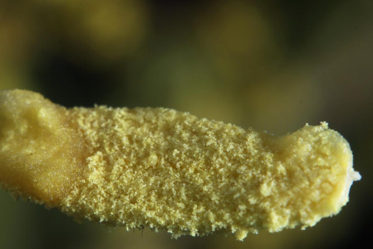 花瓣上的水珠-微距摄影_图1-3