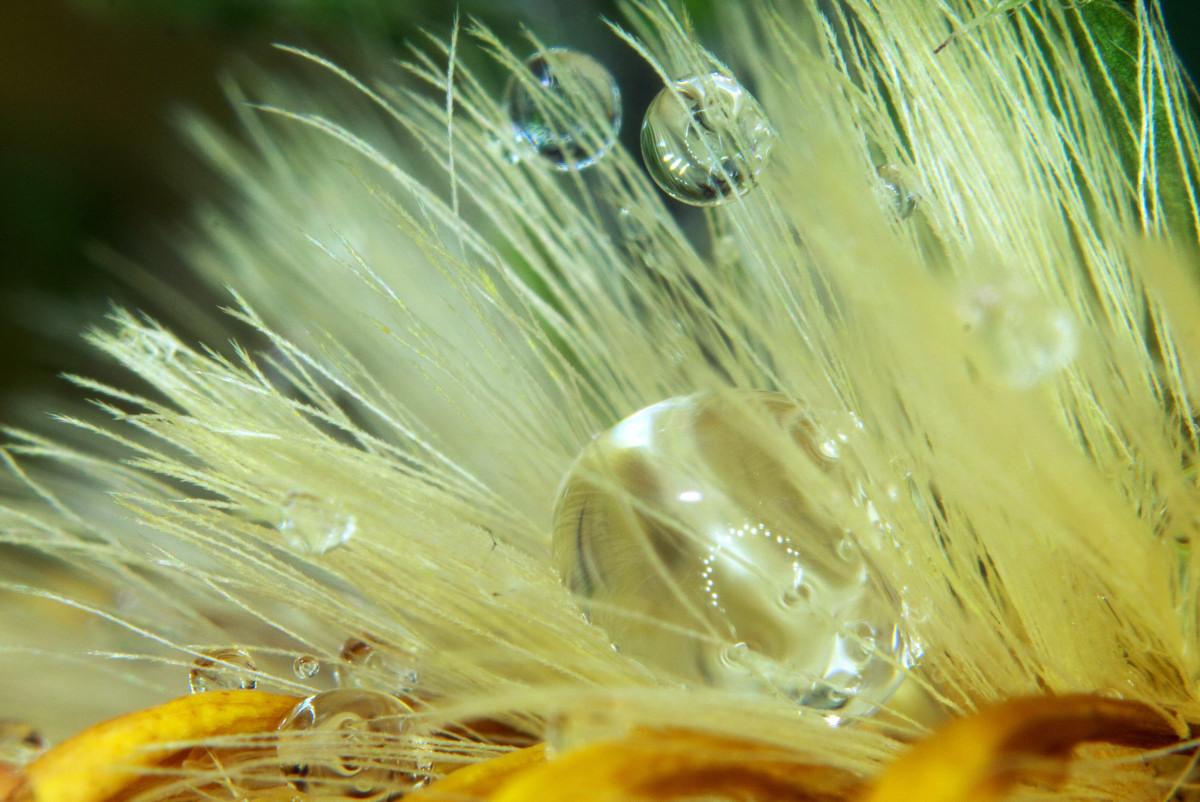 花瓣上的水珠-微距摄影_图1-7