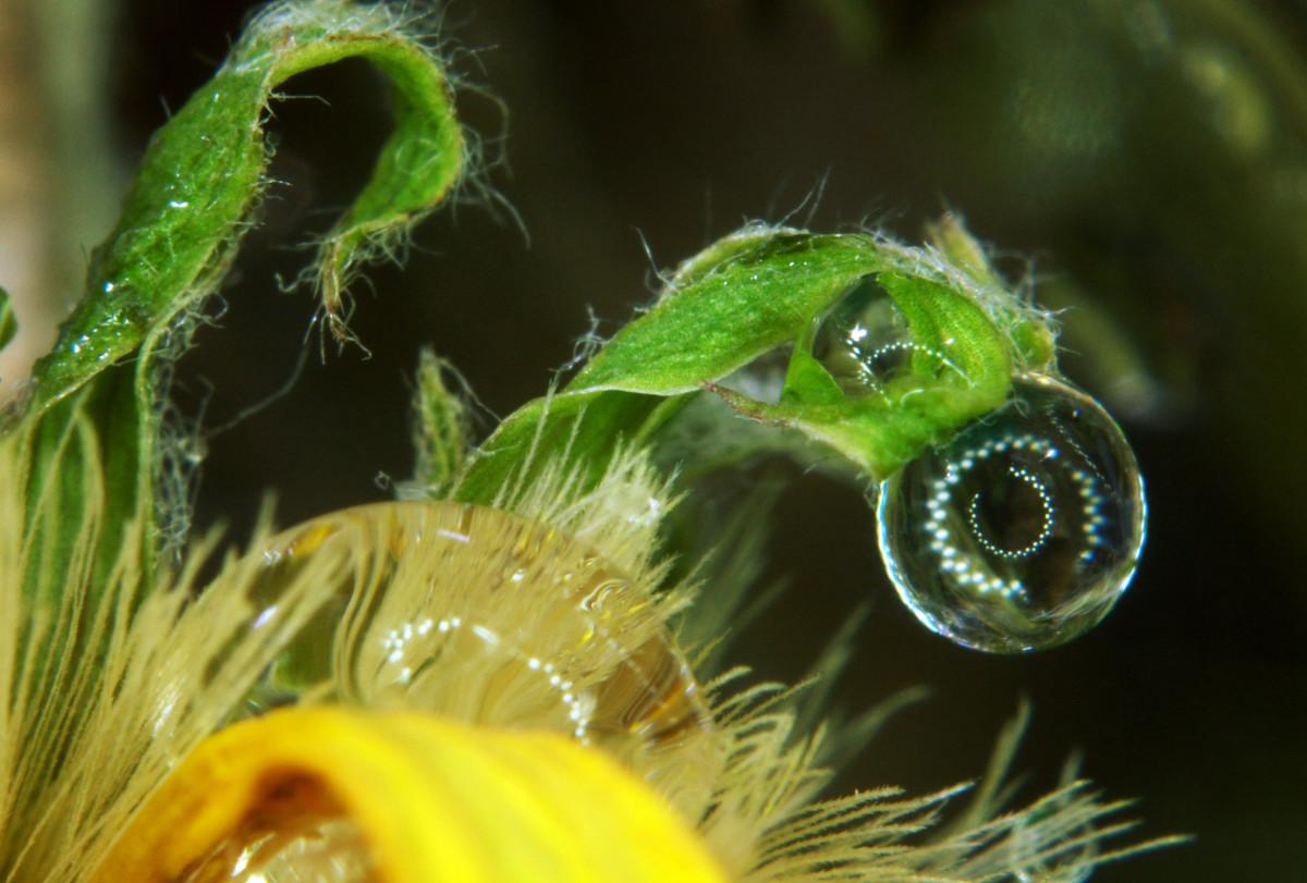 花瓣上的水珠-微距摄影_图1-8