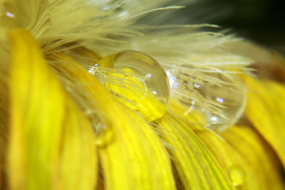 花瓣上的水珠-微距摄影_图1-9