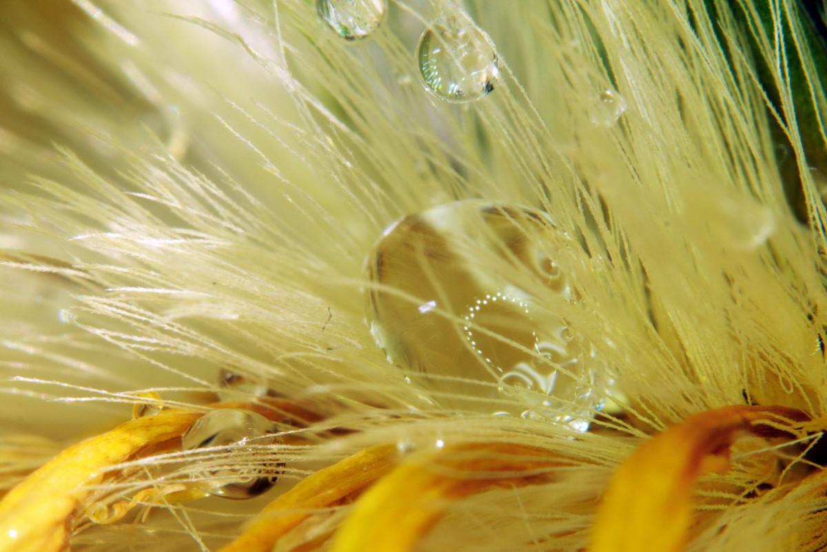 花瓣上的水珠-微距摄影_图1-10
