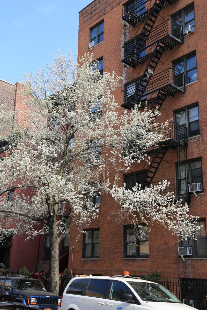 Spring NYC 街拍_图1-10