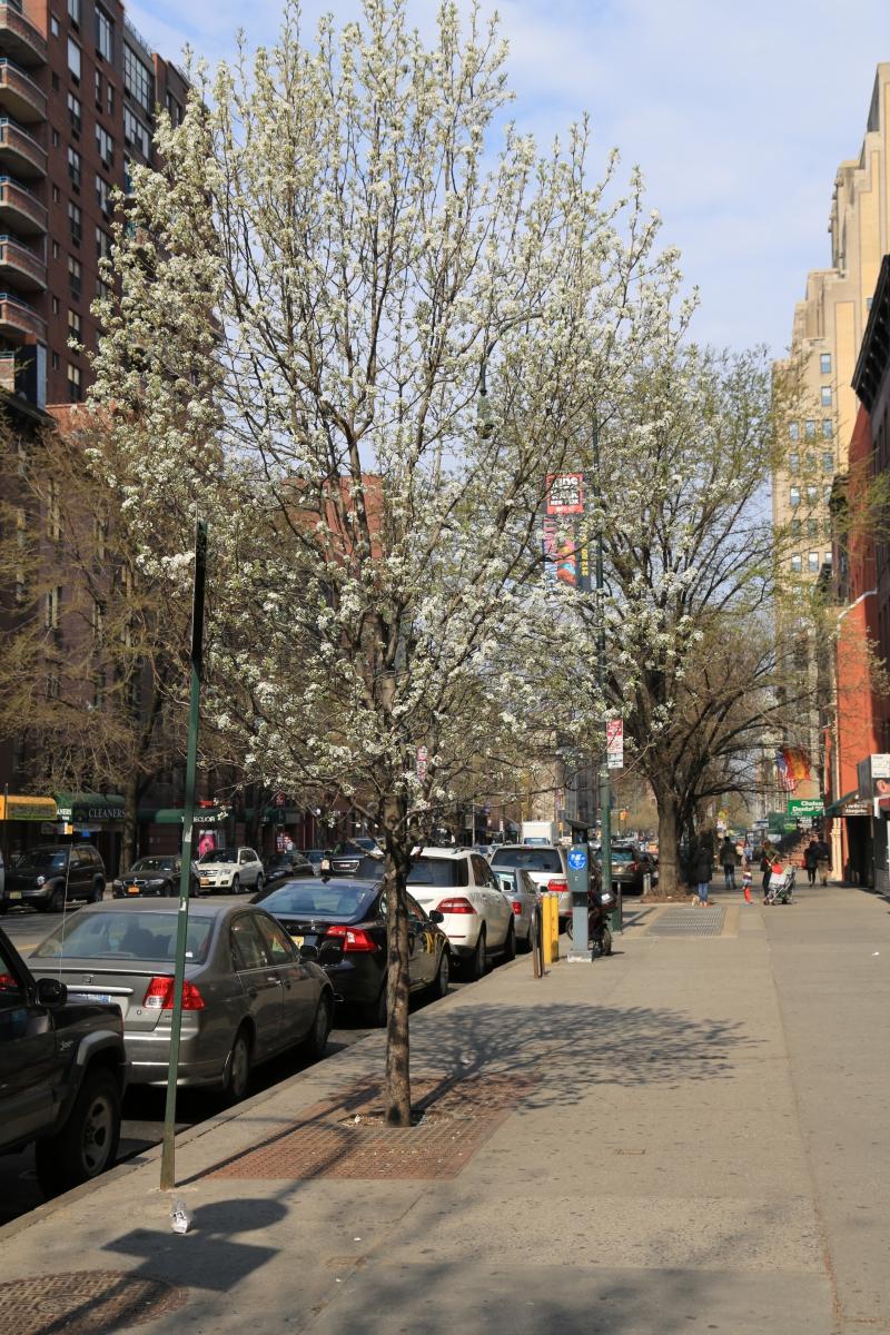 Spring NYC 街拍_图1-8