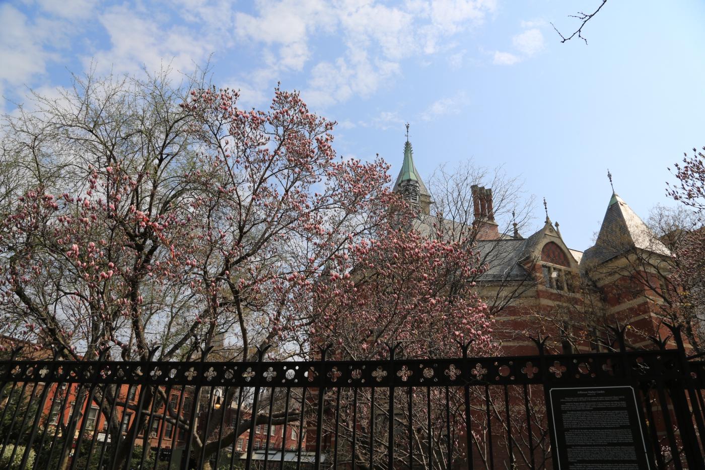 Spring NYC 街拍_图1-4