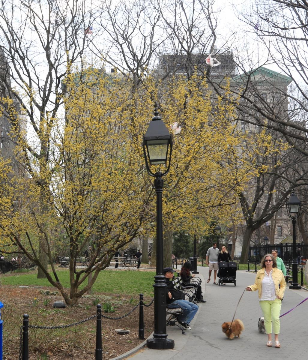 Spring NYC 街拍_图1-3