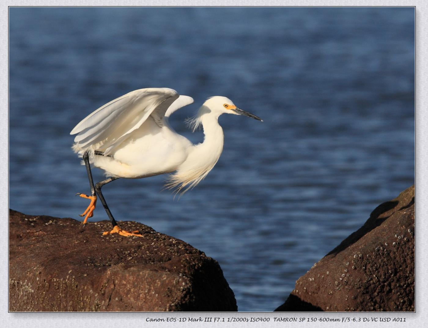 海边动物大全名称