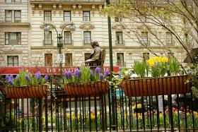 春色就在身边~曼哈顿路边的黄水仙!