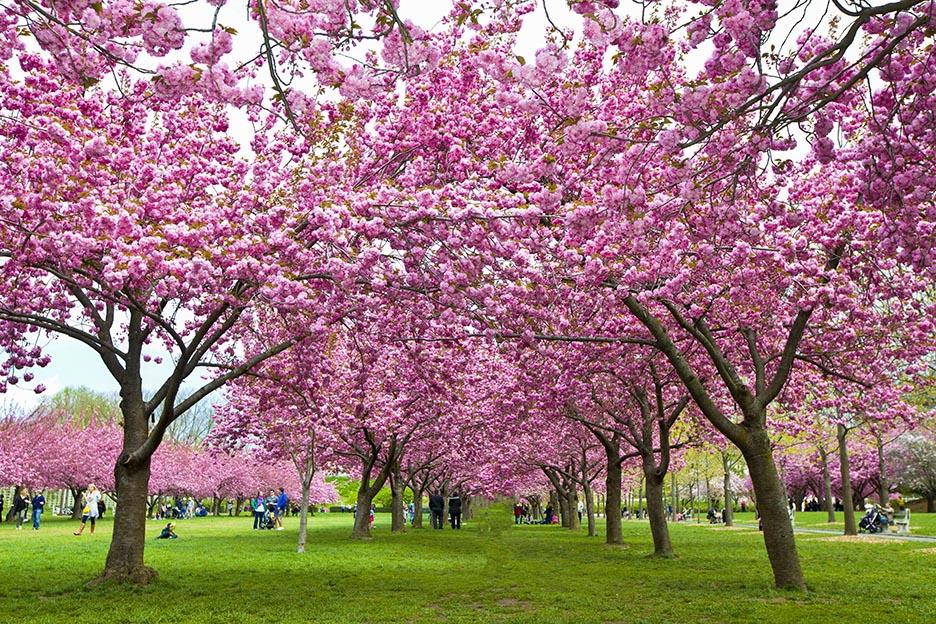 樱花盛开的季节_图1-5