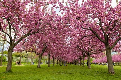 樱花盛开的季节_图1-7