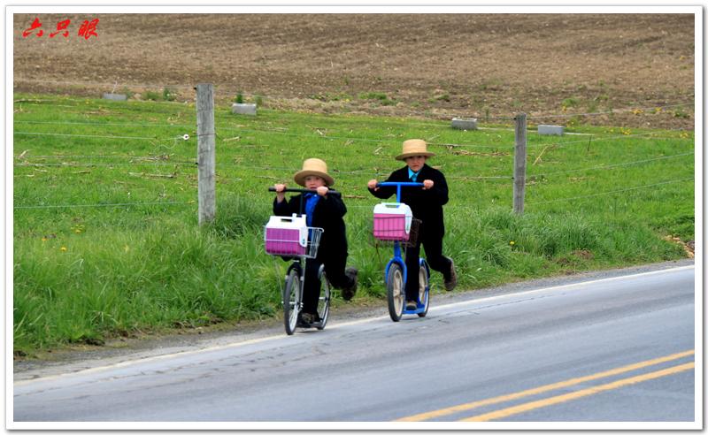六只眼:驴车马车自行车总能把你颠到家_图1-3