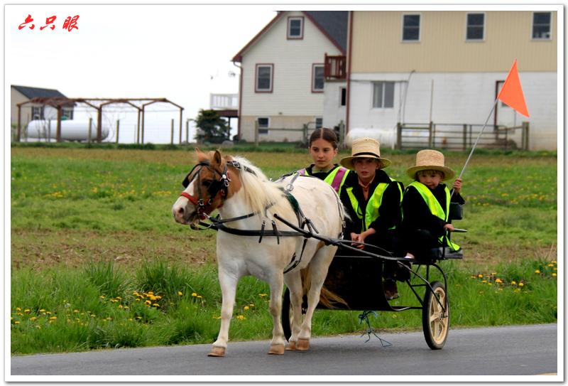 六只眼:驴车马车自行车总能把你颠到家_图1-4