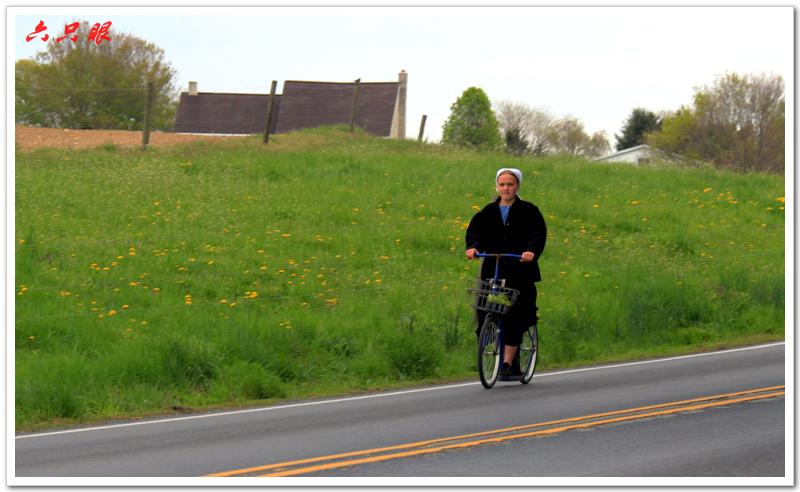 六只眼:驴车马车自行车总能把你颠到家_图1-8