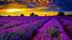 今又是《夏夜紫苑的那首歌》_图1-1