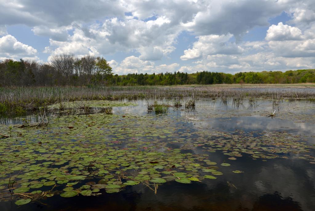 打鸟湿地_图1-1
