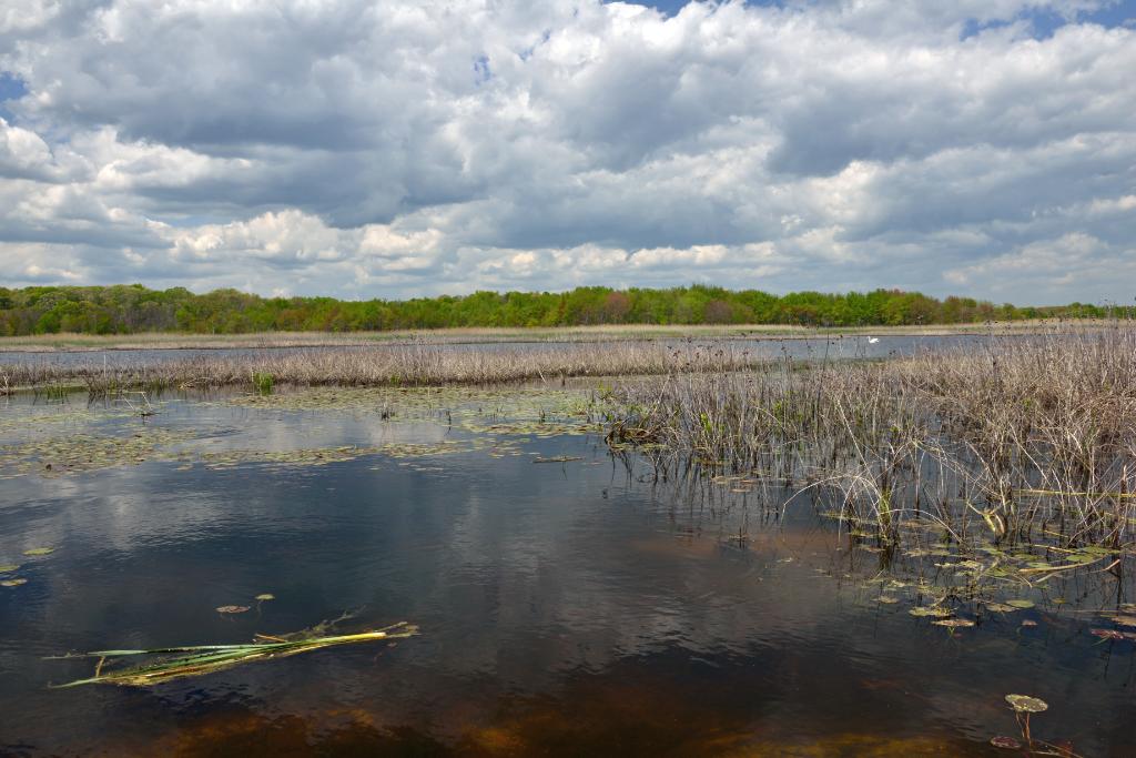 打鸟湿地_图1-2