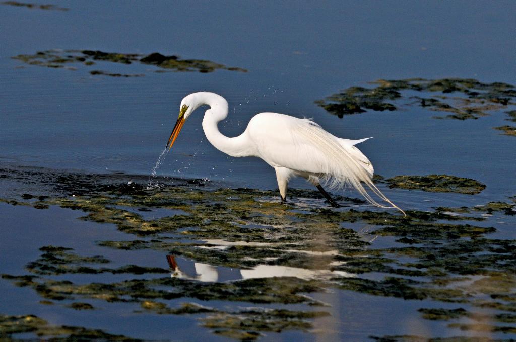 打鸟湿地_图1-8