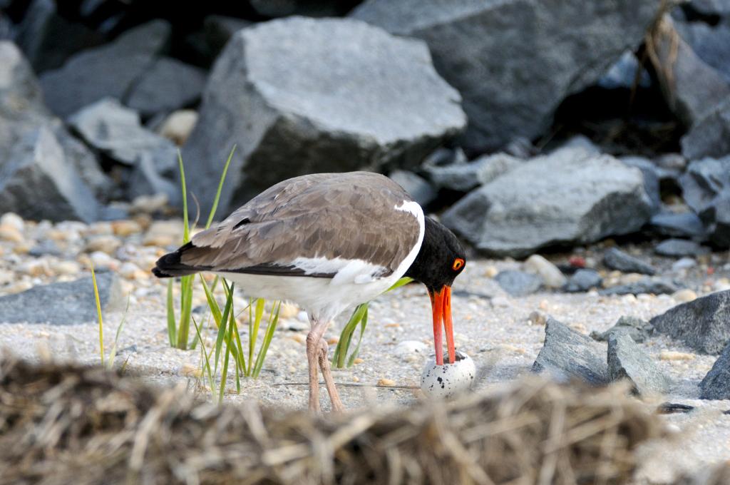 打鸟湿地_图1-5