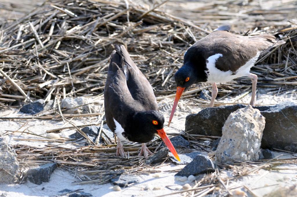 打鸟湿地_图1-6