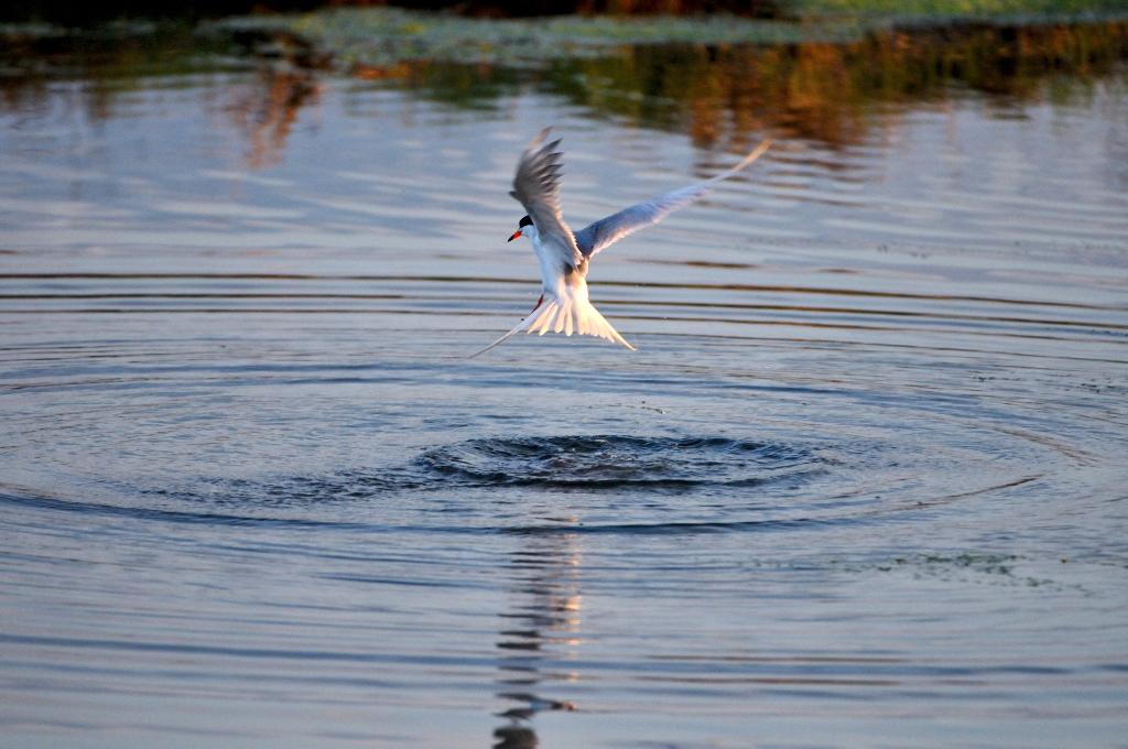 打鸟湿地_图1-10