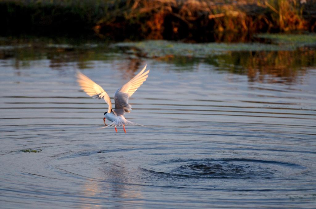 打鸟湿地_图1-11